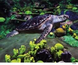Andrews + Blaine SeaWorld Jigsaw Puzzle | Sea Turtle