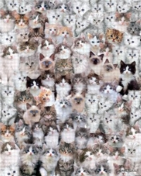 Andrews + Blaine Keith Kimberlin Cat Montage Jigsaw Puzzle
