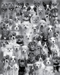 Andrews + Blaine Keith Kimberlin Dog Montage Jigsaw Puzzle