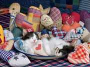 Ceaco Purr-Fect Patchwork Hearts Jigsaw Puzzle