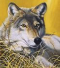 Yellow Eyes - 550pc Jigsaw Puzzle by SunsOut