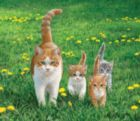 Happy Tails - 550pc Jigsaw Puzzle by SunsOut