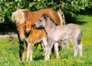 Ponies in the Meadow - 120pc Jigsaw Puzzle By Castorland