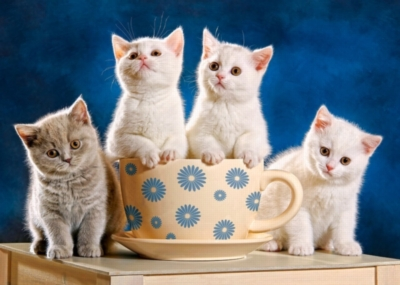 Four kittens in a teacup - 500 piece puzzle