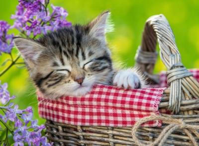 Sleeping Kitten - 100pc by Ravensburger