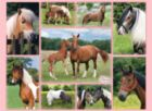 Horse Heaven - 300pc Jigsaw Puzzle By Ravensburger