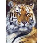 Animal Planet: Bengal Tiger - 1000pc Jigsaw Puzzle By Masterpieces