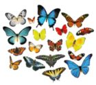 Butterflies - Mini Shaped - 500pc Jigsaw Puzzle by Lafayette Puzzle Factory