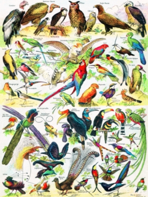 Birds/Oiseaux - 1000pc Jigsaw Puzzle by New York Puzzle Company