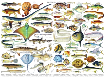 Fish/Poissons - 1000pc Jigsaw Puzzle by New York Puzzle Company