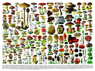 Mushrooms/Champignons - 1000pc Jigsaw Puzzle by New York Puzzle Company