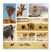 Safari Snapshots - 1000pc Jigsaw Puzzle by Melissa & Doug