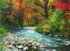 Forest Stream - 1000pc Jigsaw Puzzle by Eurographics