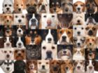 41 Dogs - Collage Collections - 1000pc Jigsaw Puzzle by Lafayette Puzzle Factory