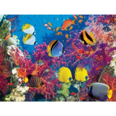 Coral Fish Parade - 500pc Jigsaw Puzzle by Lafayette Puzzle Factory