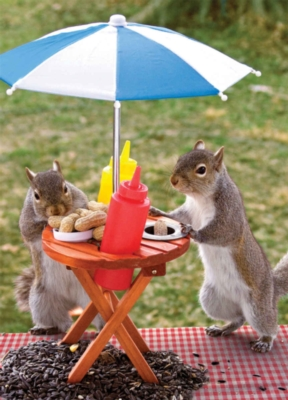Lunch Time / Squirrel Feeder - 60pc Jigsaw Puzzle By Springbok