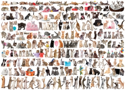 The World of Cats - 1000pc Jigsaw Puzzle by EuroGraphics