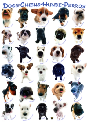 Dog Breeds - 500pc Jigsaw Puzzle by EuroGraphics