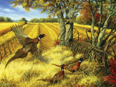 Ring-necked Pheasants - 500pc Jigsaw Puzzle by Cobble Hill