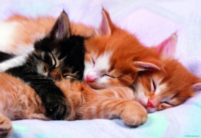 Kittens - 500pc Jigsaw Puzzle by Educa