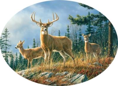 Hautman Brothers: Autumn Whitetails - 750pc Oval Jigsaw Puzzle By Buffalo Games