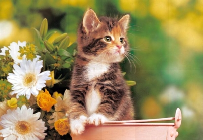 Green-Eyed Kitten - 1000pc Jigsaw Puzzle by Castorland