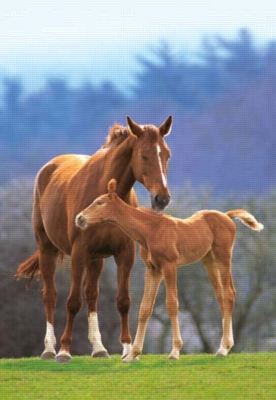 Mare and Foal - 1000pc Jigsaw Puzzle by Castorland