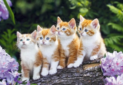 Jigsaw Puzzles - The Cat Crew