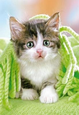 Jigsaw Puzzles - Kitten Under the Blanket