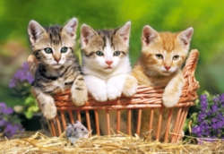 Jigsaw Puzzles - Three Lovely Kittens