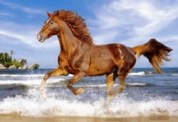 Jigsaw Puzzles - Horse on the Beach