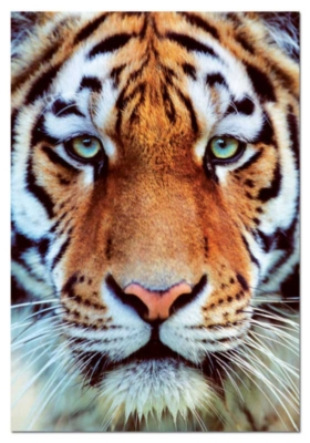 Tiger Face - 1000pc Jigsaw Puzzle by Educa