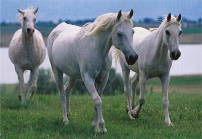 Three White Stallions - 100pc Jigsaw Puzzle By Melissa & Doug