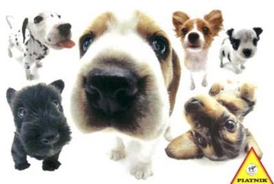 Hanadeka: Dogs - 100pc Jigsaw Puzzle by Piatnik