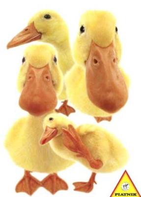 Hanadeka: Ducks - 100pc Jigsaw Puzzle by Piatnik