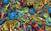 Hard Jigsaw Puzzles - Frogs