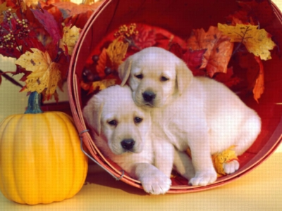 Puppies in Autumn - 200pc Jigsaw Puzzle by Ravensburger