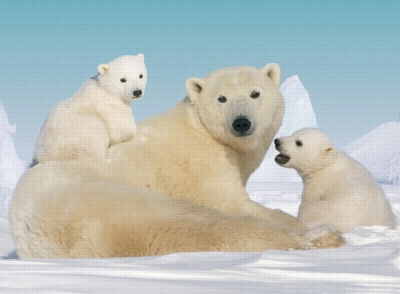 Cuddly Polar Bears - 200pc Jigsaw Puzzle by Ravensburger