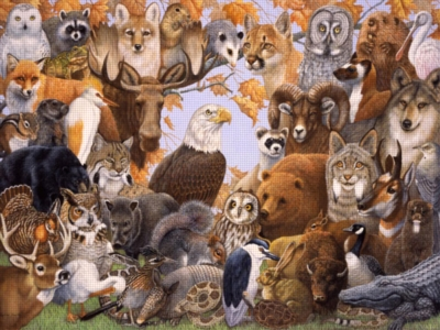 North American Animals - 300pc Educational Jigsaw Puzzle by Ravensburger