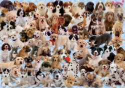 Ravensburger Jigsaw Puzzles - Dogs Galore!
