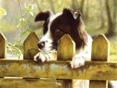 Peeking Pooch - 1000pc Jigsaw Puzzle by Ravensburger
