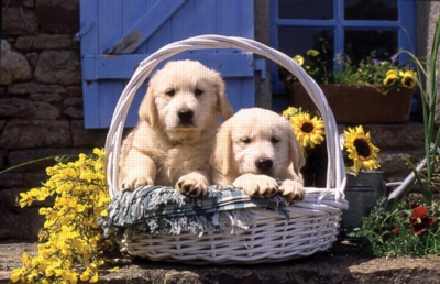 Basket of Puppies - 1000pc Jigsaw Puzzle by Ravensburger
