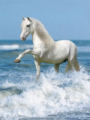 Horse in the Surf - 1000pc Jigsaw Puzzle by Ravensburger