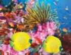 Coral Carnival - 500pc Springbok Jigsaw Puzzle