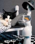 Springbok Jigsaw Puzzles - Checkerboard Cat
