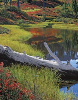 Calming Reflection - 1500pc Springbok Jigsaw Puzzle