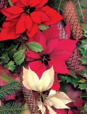 Poinsettias & Pine Cones - 350pc Large Format Jigsaw Puzzle by Springbok