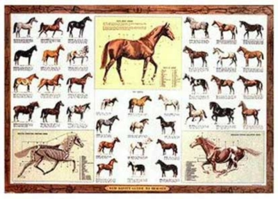 Parade Of Thoroughbreds - 1000pc Jigsaw Puzzle by Serendipity