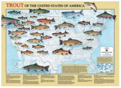 Hook A Trout - 1000pc Jigsaw Puzzle by Serendipity