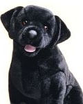 Beau Black Lab - 25'' Dog by Douglas Cuddle Toys
